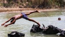 گاومیشها؛ همبازی کودکان حمیدیه/تصاویر