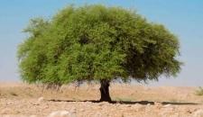 تصاویر طبیعت روستای سراج آباد بوشهر