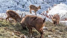 تفرجگاه کوهستانی عینالی تبریز/تصاویر