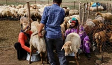 تصاویر/ زندگی عشایر در دامنه سبلان
