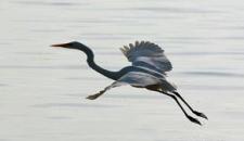 تصاویر/ مهاجرت پرندگان به تالاب عشقآباد
