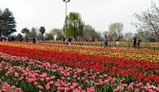 تصاویر/ جشنواره گلهای پیازی در مشهد
