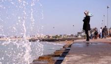 تصاویر/ پرندگان مهاجر در سواحل بوشهر