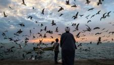 تصاویر/ پرندگان دریایی سواحل بوشهر