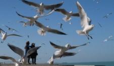 تصاویر/ جاذبههای ساحل بوشهر