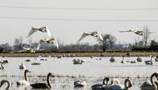 کوچ سالانه پرندگان به تالابهای مازندران/تصاویر