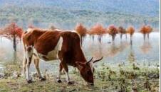 طبیعت پاییزی دریاچه الندان ساری/تصاویر